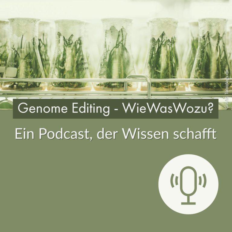 Grundlagen/ mit Prof. Dr. Holger Puchta